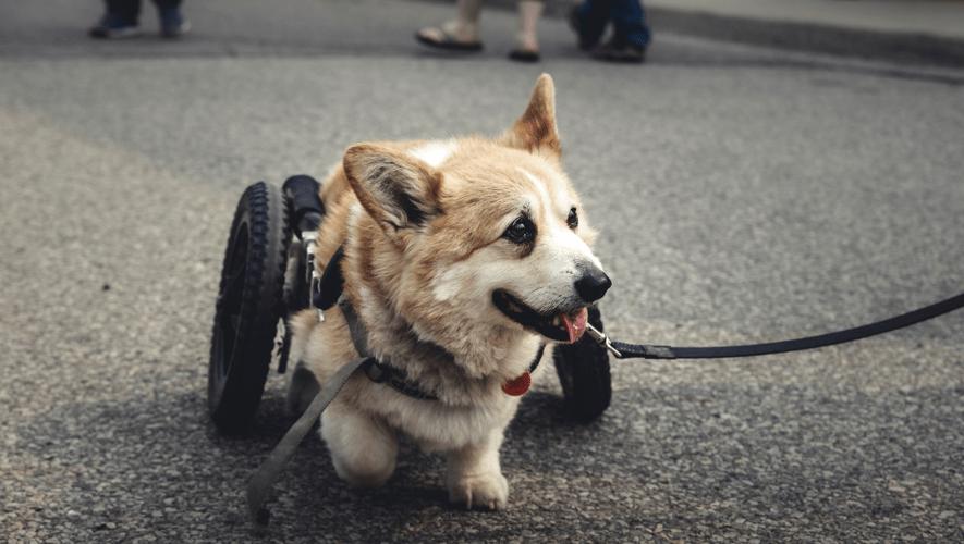 Veterinaria geriátrica: Consejos para cuidar a tu mascota en la tercera edad