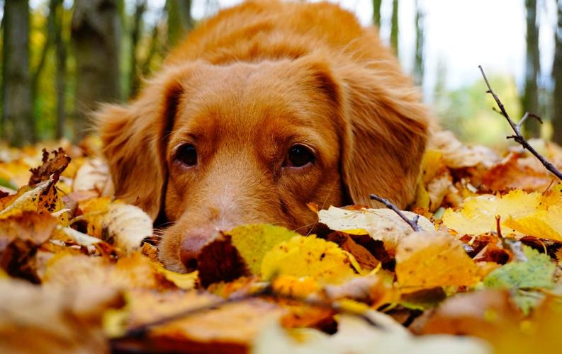 5 consejos para elegir veterinario