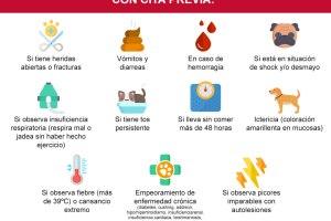 Motivos de urgencia más frecuentes durante el confinamiento