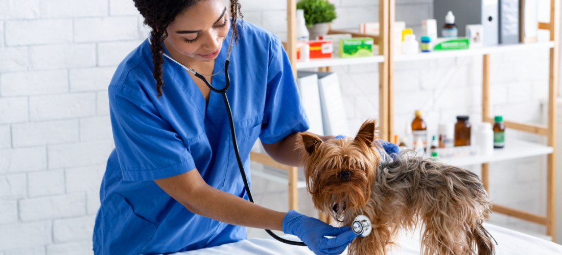 Especialidades veterinarias de pequeños animales
