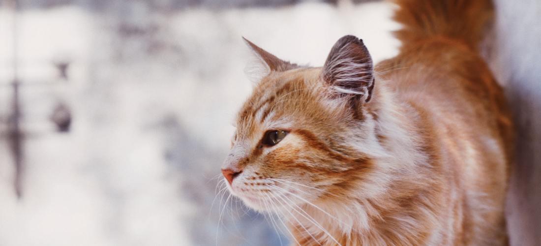 Consejos para cuidar a un gato durante el verano