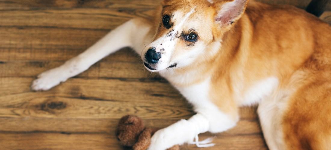 Botiquín casero para mascotas: ¿qué debemos incluir?