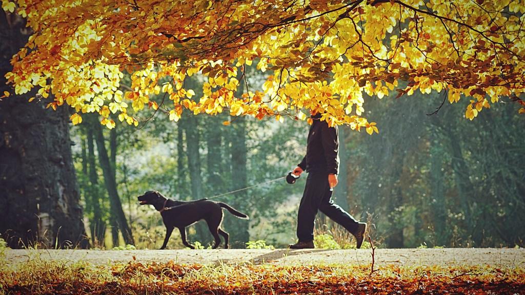 paseos otoño