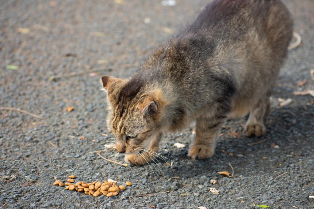 intoxicación gato