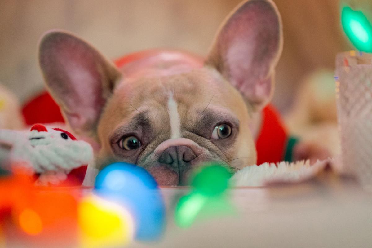 Motivos para no regalar una mascota en Navidad