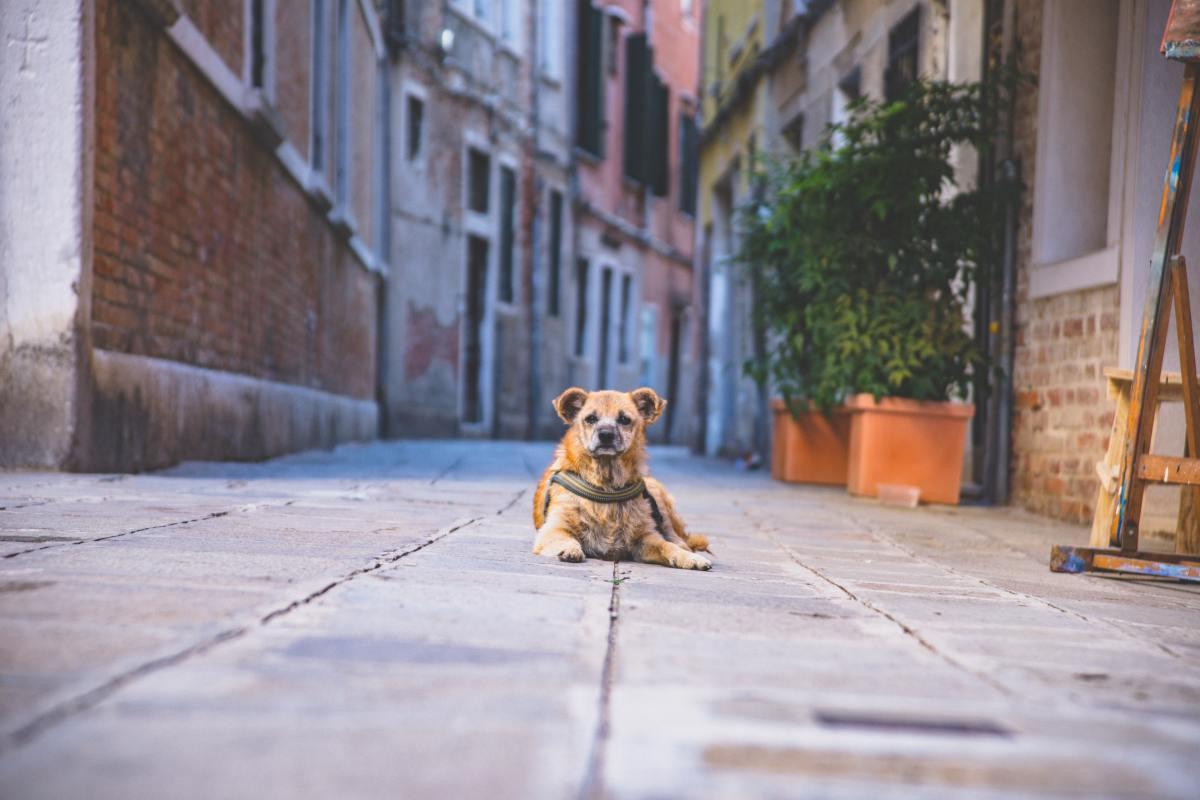 El abandono de animales es un acto ilegal y la población debe concienciarse