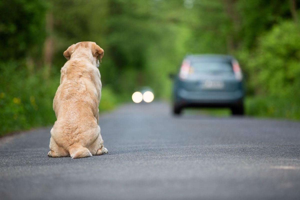 286.000 perros y gatos fueron abandonados en España en 2020