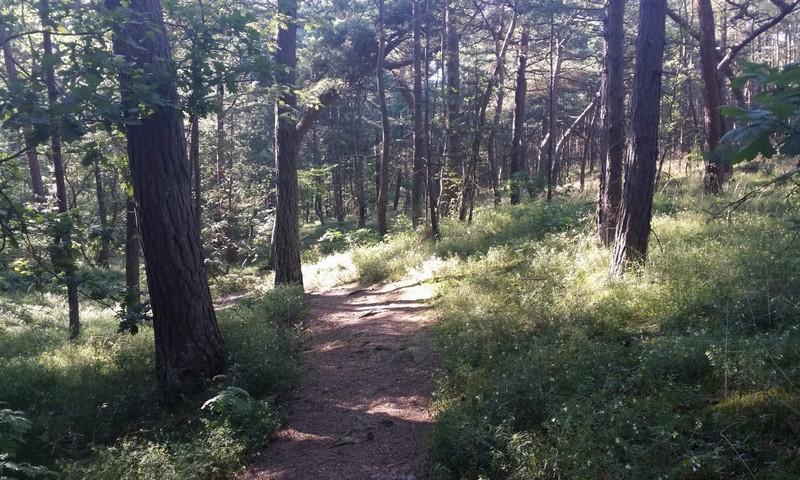 Jastarnia skog