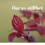 rödal öv mot grön bakgrund - text öar av stillhet