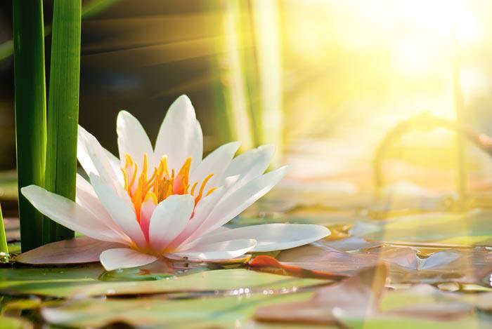 Recommended Meditation Programs
