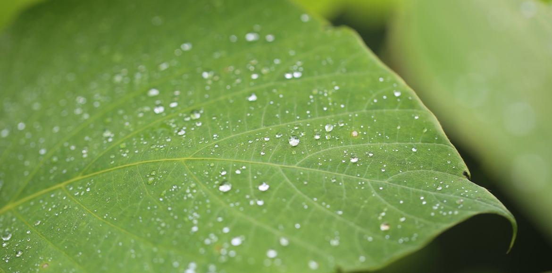 Foto groen blad