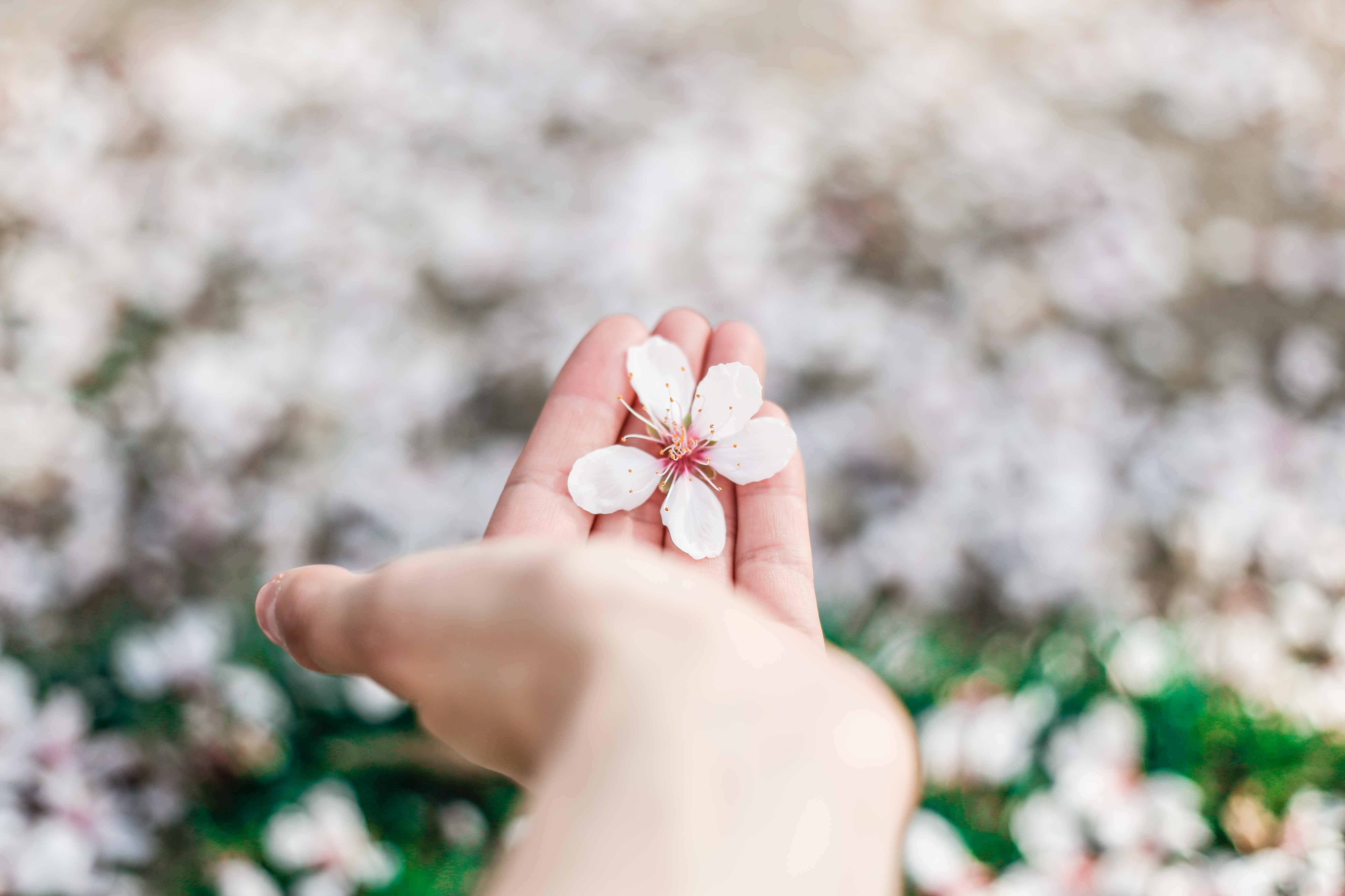 Foto hand met bloemen