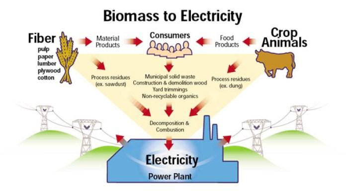 biomass_grafico Biomassa: definizione, vantaggi e svantaggi Energie Alternative