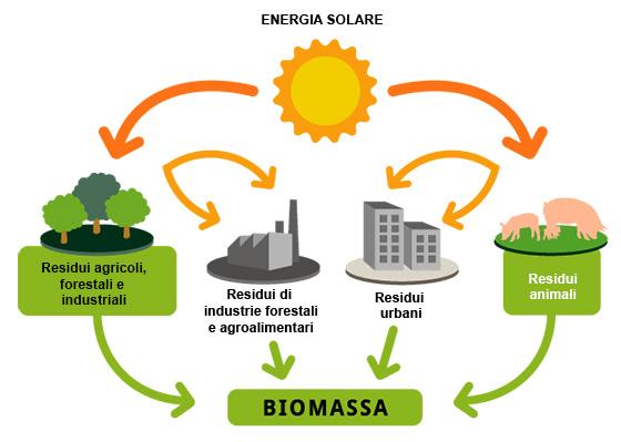 biomassa Energie rinnovabili: cosa sono, tipi, fonti e differenze Guide
