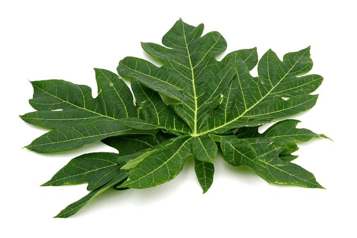 daun pepaya