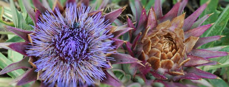 Blume als Energieorganismus