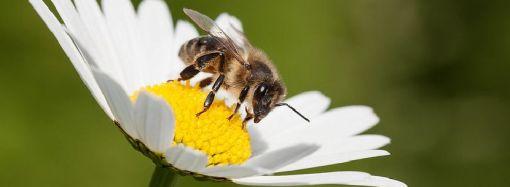 Nova studija: Masovno izumiru insekti – Čeka nas ekološka katastrofa!