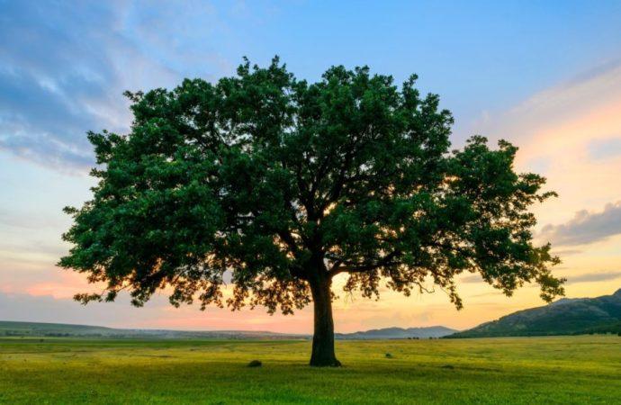 Studenti koji žele diplomirati na Filipinima morat će zasaditi deset stabala drveća