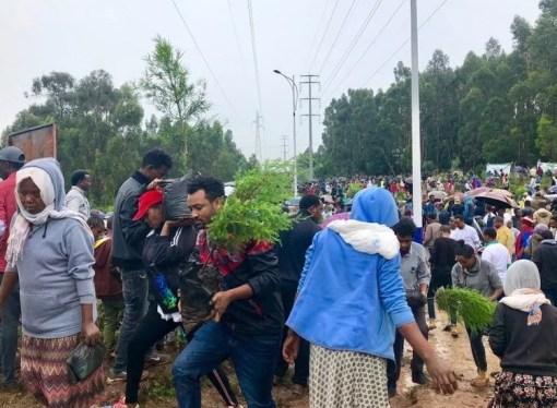 """Etiopljani zasadili više od 200 miliona stabala i """"oborili svjetski rekord"""""""