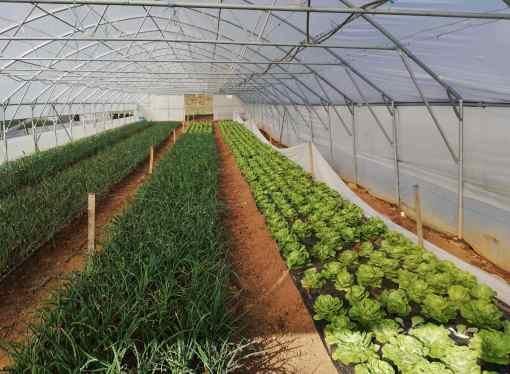 Općina Novi Grad raspisala javni poziv za davanje na besplatno korištenje zemljišta u državnoj svojini u poljoprivredne svrhe