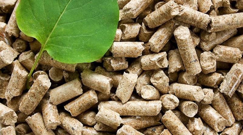 Почему биоэнергетика важна для нашей будущей устойчивой энергетической системы