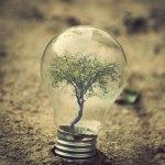 Жизнь в лампочках от Адриана Лимани (6)