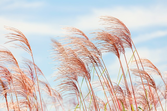 Wind kann uns bei der energetischen Reinigung unterstützen