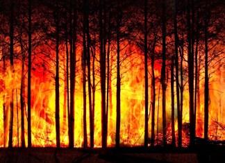 klima-planeten-retten