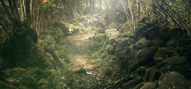 Soft Path