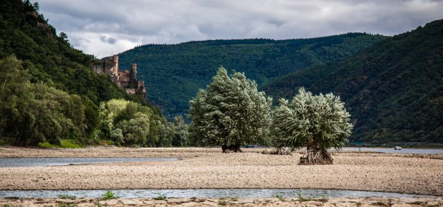 Low water level in river Rhine, August 2015