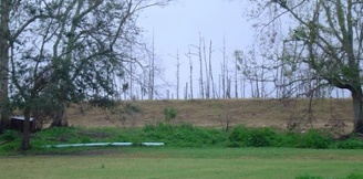 dead trees on the other side of the levee