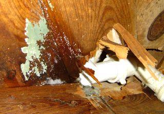 halloween mold subfloor crawl space plumbing leak