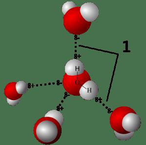 hydrogen bonds in water