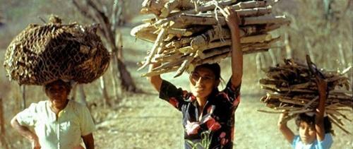 solar-cookers-internatioal-carry-firewood-Guatemala