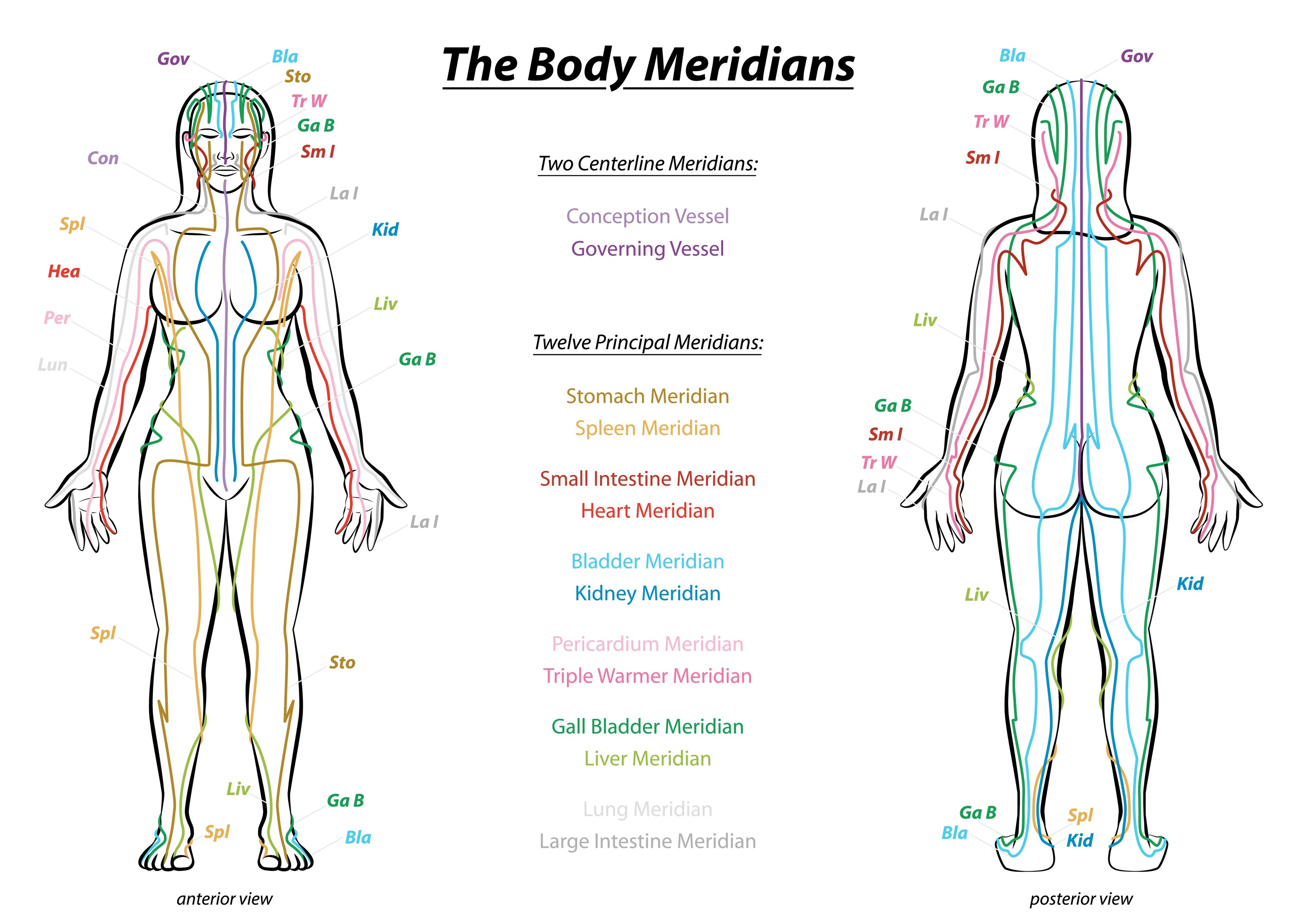 Meridian Muscle Training