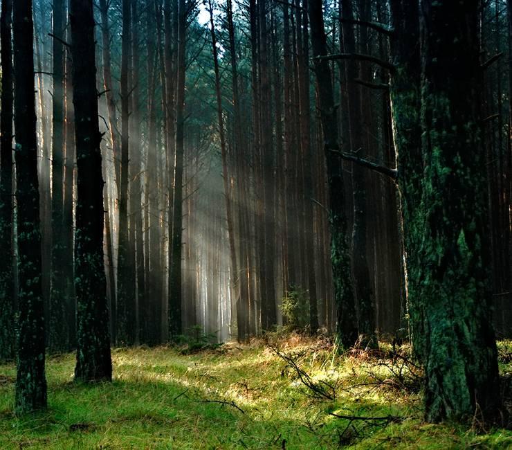 Et si la nature avait un lien direct avec notre santé, que feriez-vous ?
