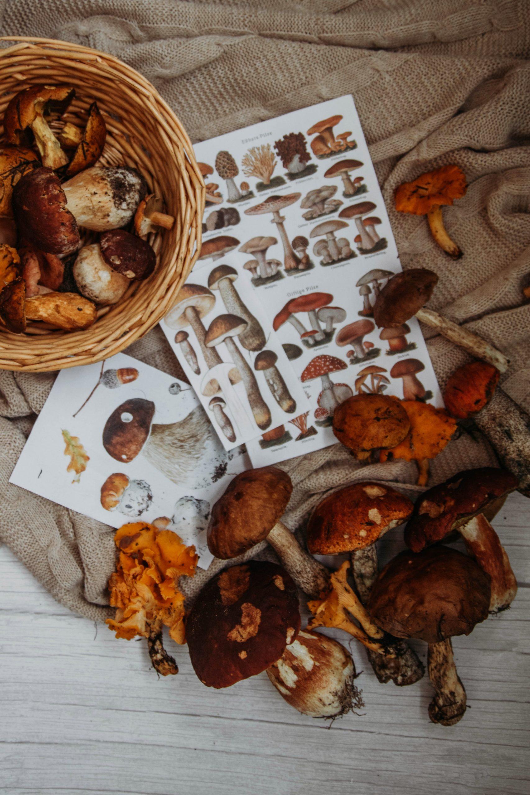Goûter les produits de la nature est un bon moyen de se rapprocher d'elle. Ici avec les champignons.