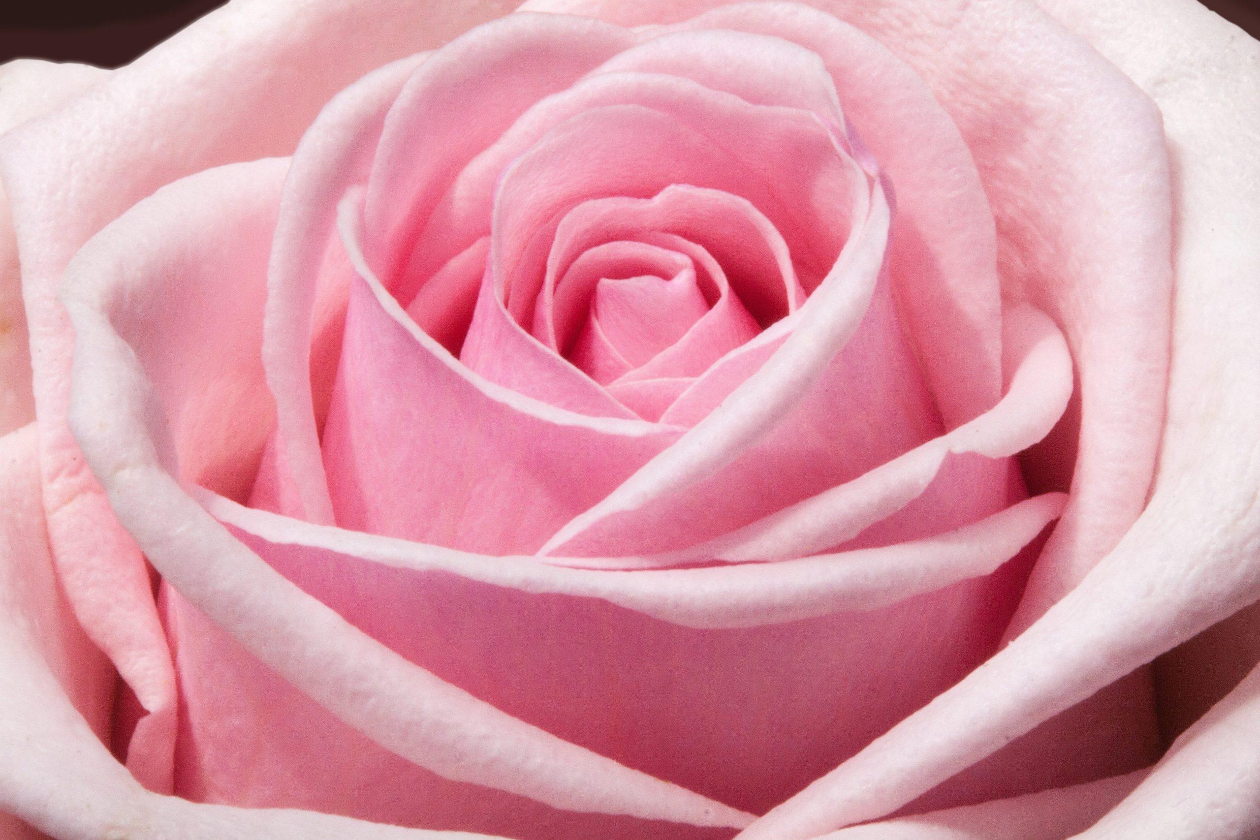 Les notes florales apportent une douceur de fleur à nos parfums.