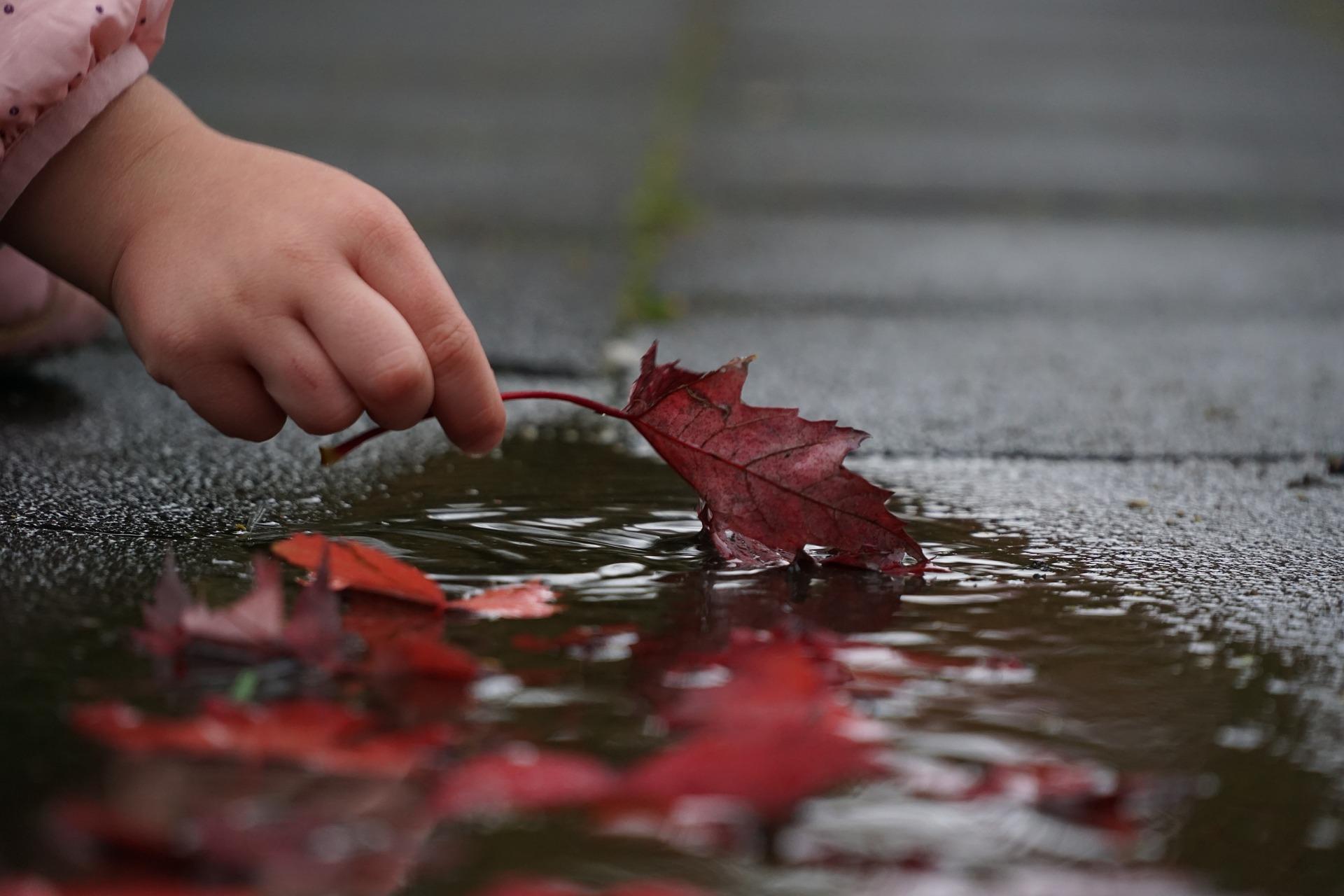 Attention aux feuilles mouillées, elles s'abiment plus vite que les autres.