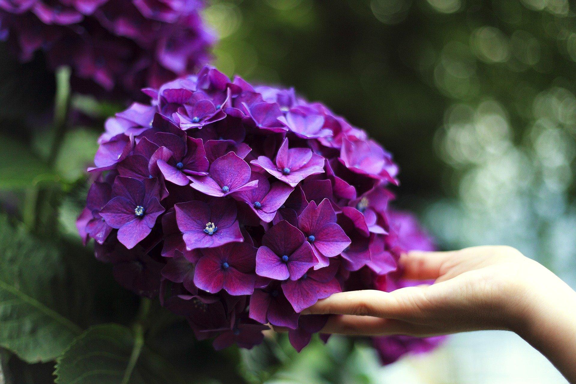 Se rapprocher de la nature passe par le contact alors utilisez ce magnifique sens du toucher dont nous avons été pourvu.