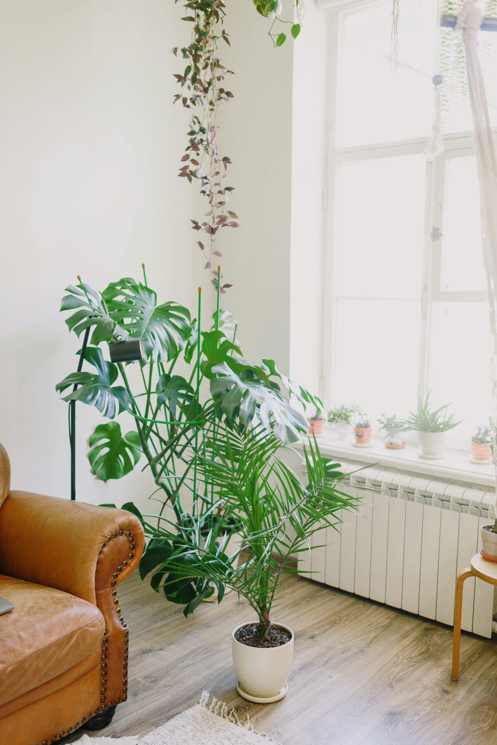 La lumière naturelle et les plantes vertes nous assurent de bonnes conditions de travail et donc un bon développement de notre sixième sens.