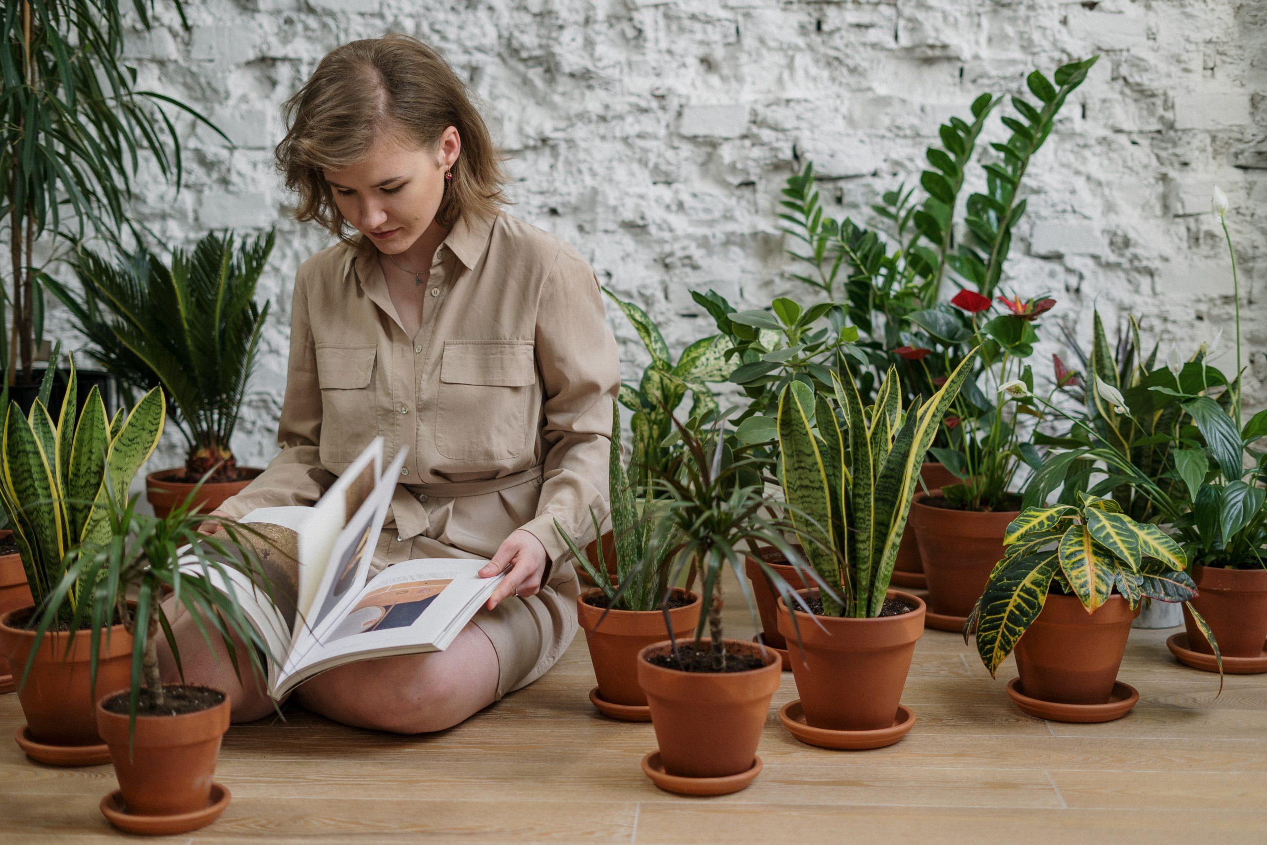 Agrémentez votre intérieur de plantes vertes permet de faire entrer un peu de nature chez vous.