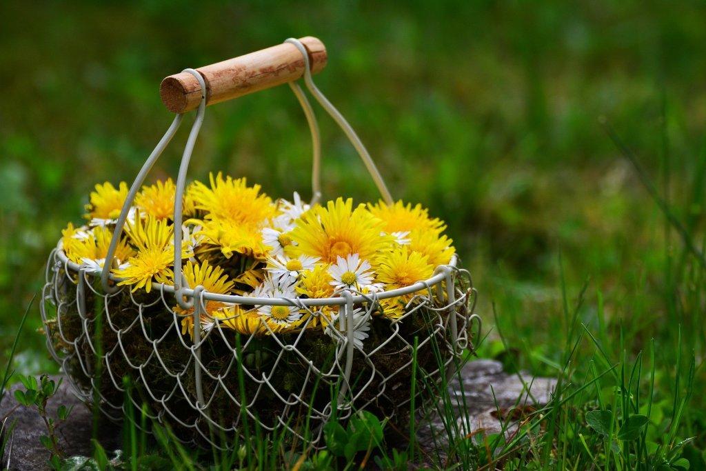 N'oubliez pas votre panier quand vous partez en récolte. Vous pouvez aussi emmener des sacs krafts.