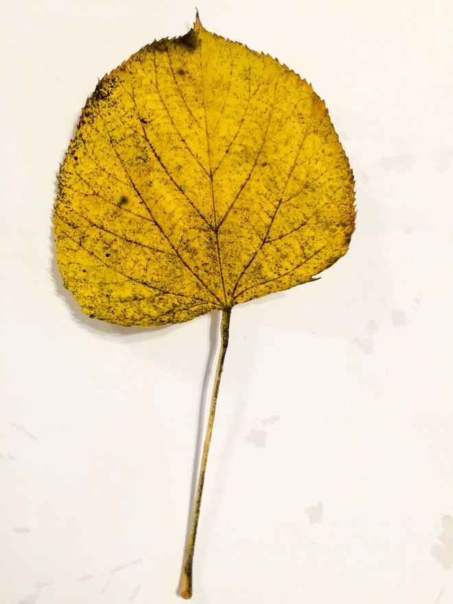 Leaves I