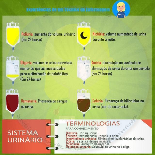 Terminologia Urina