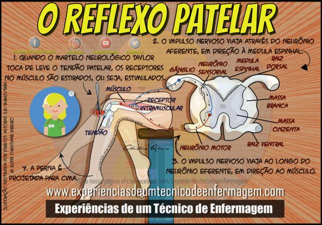 Entendendo o Reflexo Patelar