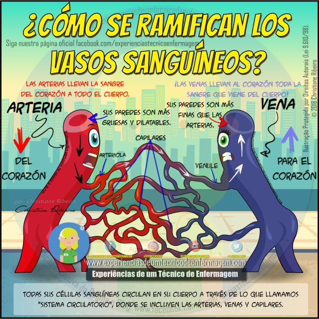 Arterias, Venas y Capilares