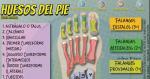 Los Huesos del Pie