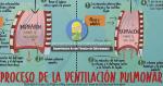 Entendiendo el Proceso de la Ventilación Pulmonar