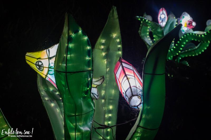 pairi daiza nuit magique Les estivales de Pairi Daiza,  le parc ouvert jusquà 23h   dates, tarifs,info et programmes.